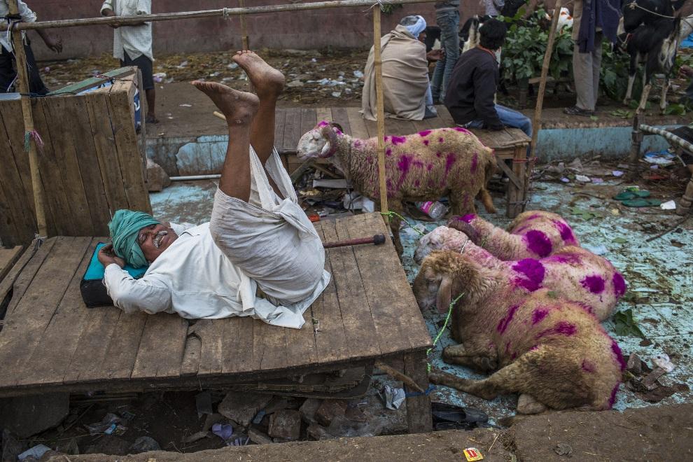 3.INDIE, Delhi, 27 października 2012: Sprzedawca owiec czekający na klientów. (Foto: Daniel Berehulak/Getty Images)
