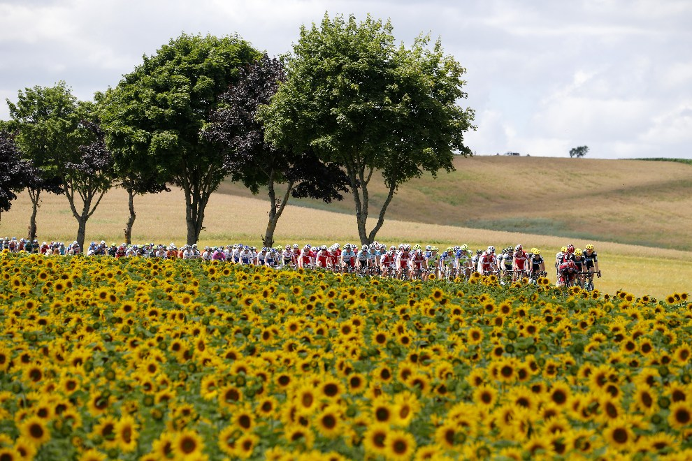 12.FRANCJA, Plancher-les-Mines, 7 lipca 2012: PeletonTDF  jadący drogą między polami słoneczników. AFP PHOTO / JOEL SAGET