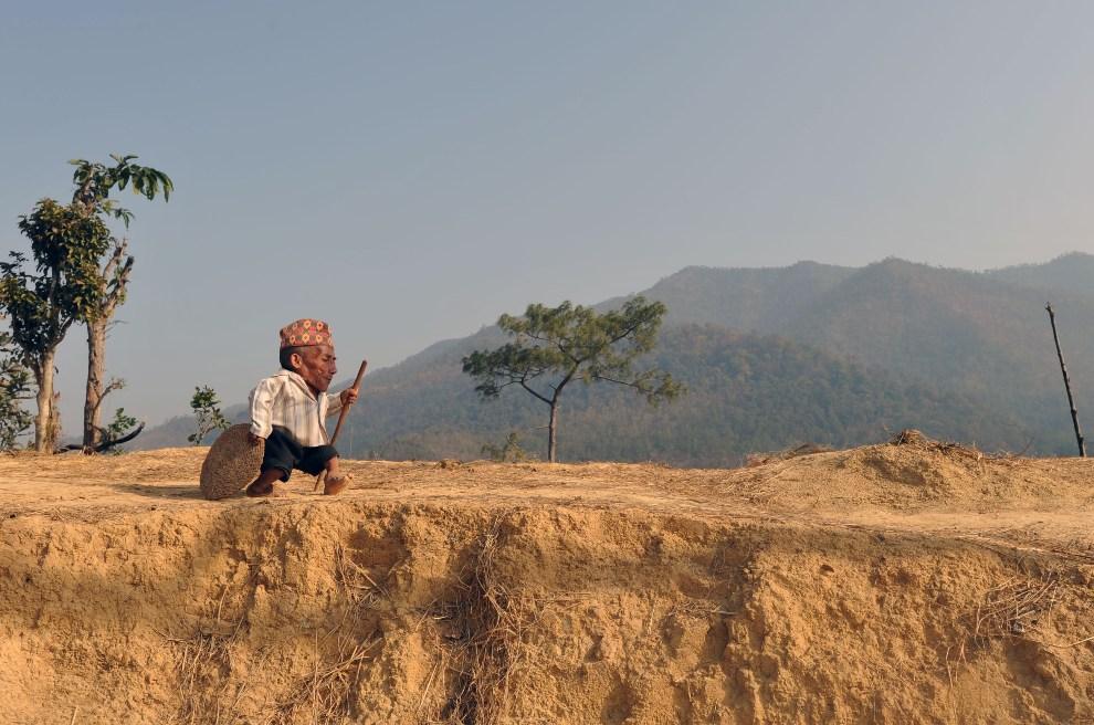 17.NEPAL, Dang, 21 lutego 2012: 72-letni Chandra Bahadur Dangi, najniższy (56 cm) żyjący człowiek. AFP PHOTO/Prakash MATHEMA