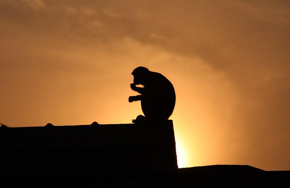 24.INDIE, Ayodhya, 5 grudnia 2012: Sylwetka małpy siedzącej na dachu warsztatu. AFP PHOTO/Sanjay KANOJIA