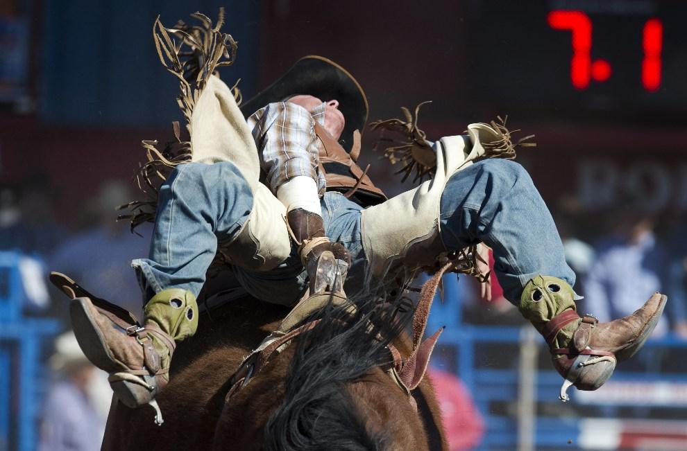 36.USA, Tucson, 26 lutego 2012: Shon Gibson podczas występu na rodeo w Tucson. AFP PHOTO/DON EMMERT