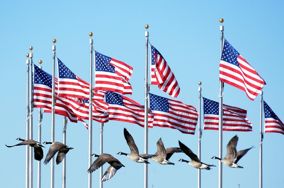 18. USA, Waszyngton, 20 stycznia 2013: Stado gęsi przelatuje obok pomnika Waszyngtona. AFP PHOTO / JOE KLAMAR