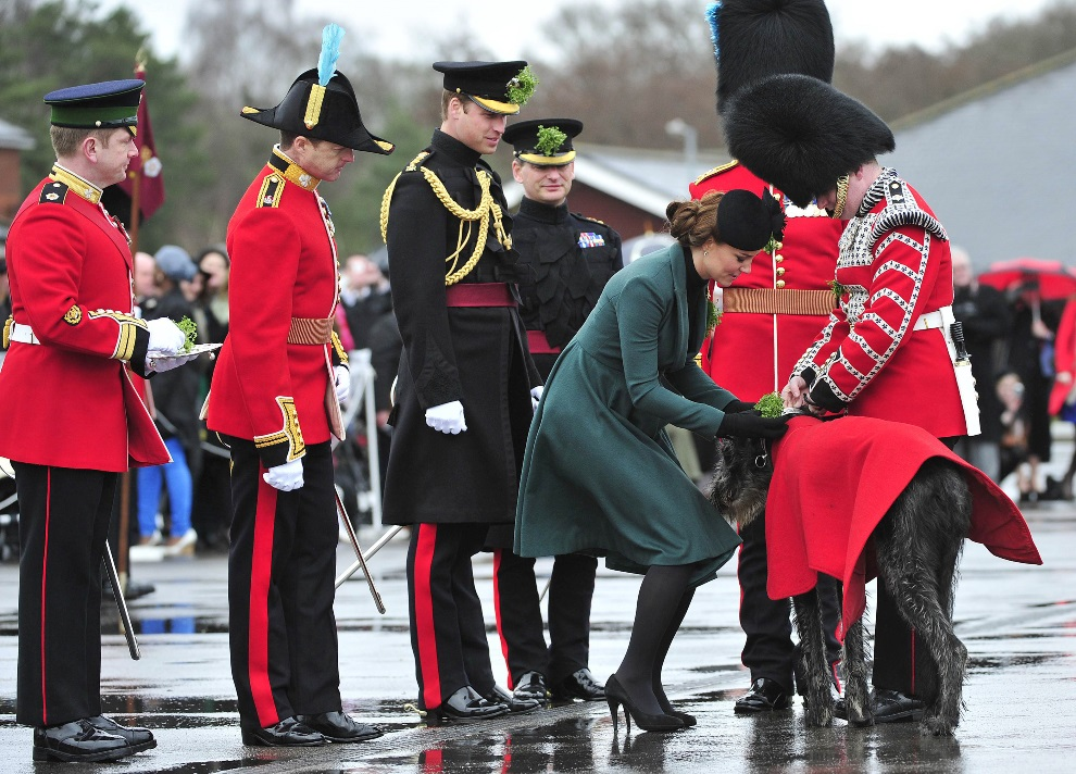 26.WIELKA BRYTANIA, Aldershot, 17 marca 2013: Księżna Katarzyna przypina wiązankę z koniczyny psu-maskotce 1. Batalionu Gwardii Irlandzkiej. AFP PHOTO/POOL/TOBY   MELVILLE