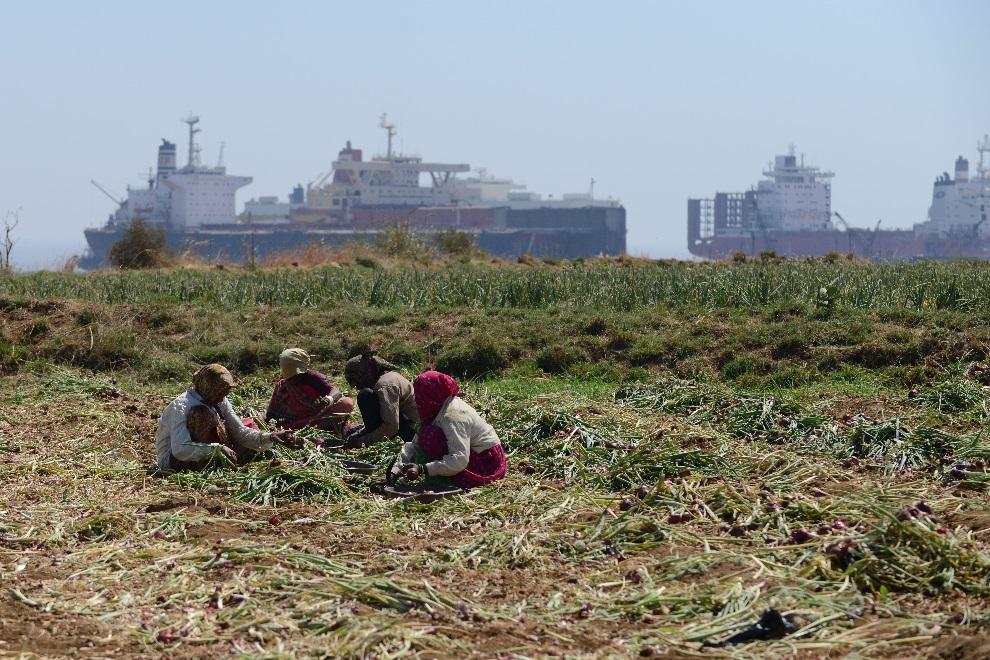 2.INDIE, Mithi Virdi, 4 marca 2013: kobiety pracujące w polu na tle złomowanych statków. AFP PHOTO / Sam PANTHAKY