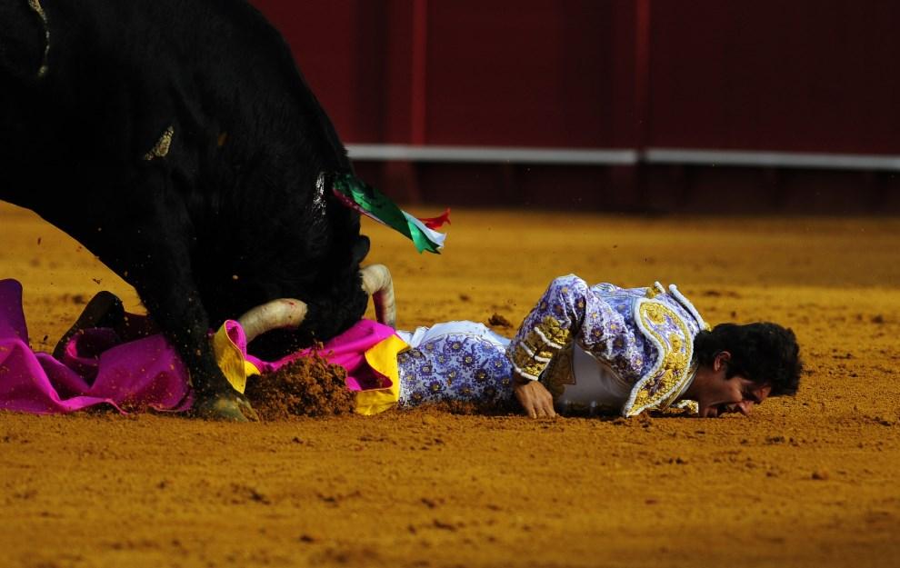 2.HISZPANIA, Sewilla, 15 kwietnia 2913: Matador Sebastian Castella atakowany przez byka. AFP PHOTO/ CRISTINA QUICLER