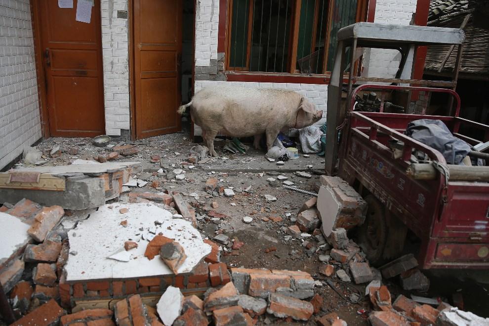 2.CHINY, Chengdu, 21 kwietnia 2013: Podwórko jednego z uszkodzonych domów. ( Foto: Feng Li/Getty Images)