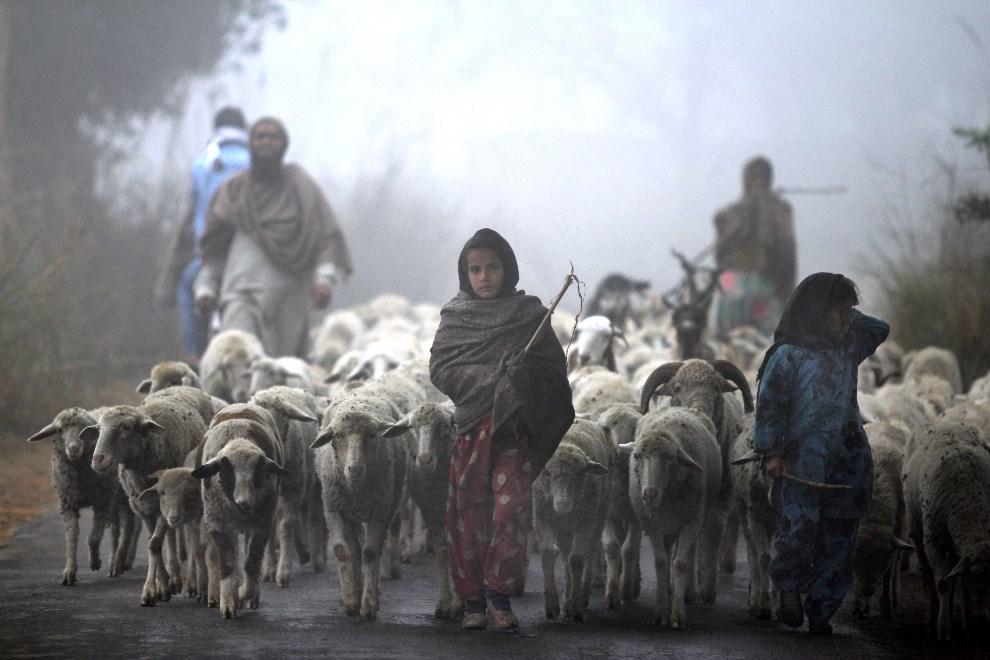 1.INDIE, Jammu, 19 grudnia 2013: Dziewczynki prowadzące stado owiec. AFP PHOTO/STR
