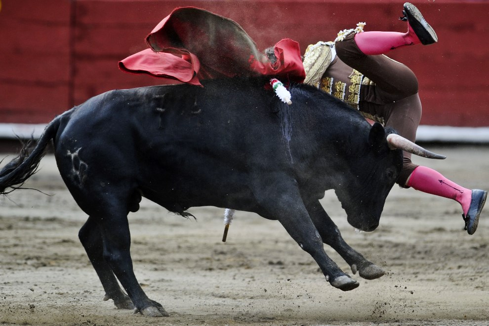 37.PERU, Lima, 27 października 2013: Juan Pablo Llaguno walczący z bykiem. AFP PHOTO/ERNESTO BENAVIDES
