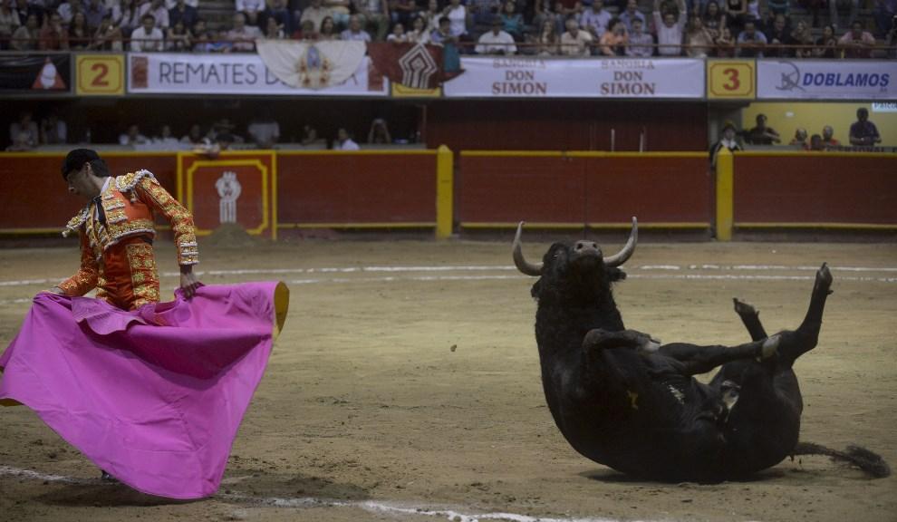 16.KOLUMBIA, Medellín, 18 stycznia 2014: Manuel Libardo w trakcie walki z bykiem. AFP PHOTO/Raul ARBOLEDA