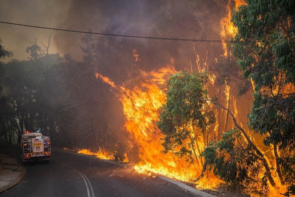 22.AUSTRALIA, Perth, 12 stycznia 2014: Pożar buszu na przedmieściach Perth. AFP PHOTO / DFES / EVAN COLLIS