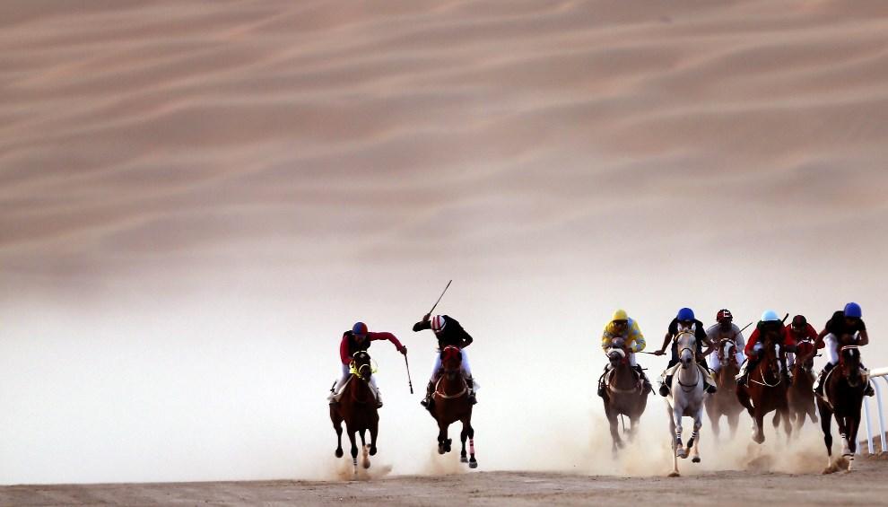 28.ZEA, Liwa, 2 stycznia 2014: Wyścig koni czystej krwi arabskiej na pustyni Liwa. AFP PHOTO /KARIM SAHIB