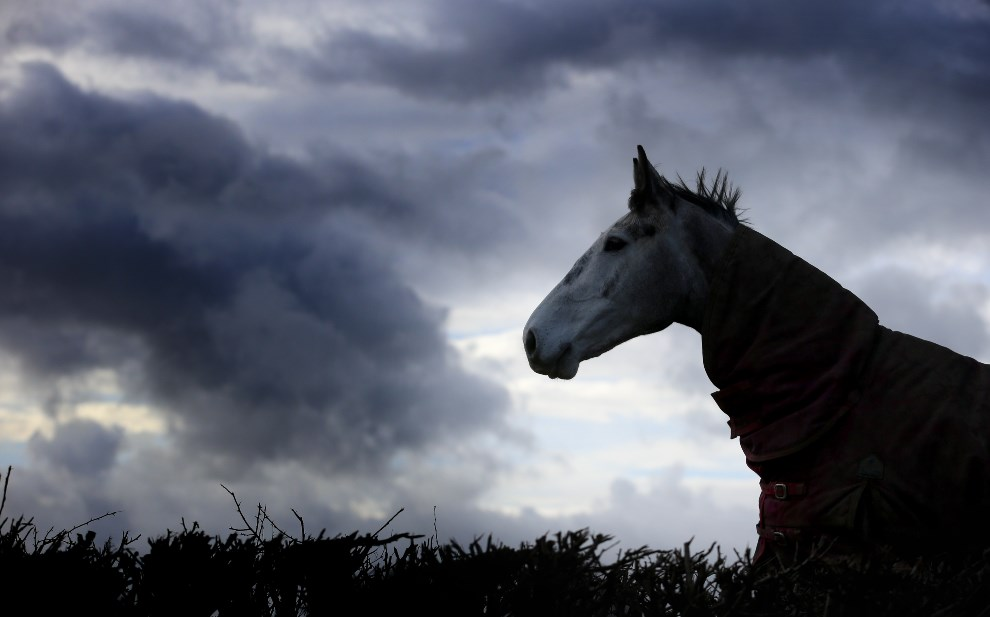 19.WIELKA BRYTANIA, Muchelney, 21 stycznia 2014: Koń na zalanych przez powódź terenach wokół Muchelney. (Foto:  Matt Cardy/Getty Images)