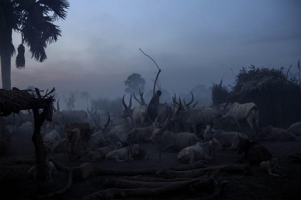 21.SUDAN POŁUDNIOWY, Yirol, 12 lutego 2014: Mężczyzna z plemienia Dinka dogląda swojego stada. AFP PHOTO / FABIO BUCCIARELLI