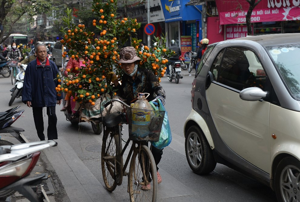 26.WIETNAM, Hanoi, 27 stycznia 2014: Kobieta przewozi na rowerze kumkwat przeznaczony na sprzedaż. AFP PHOTO/HOANG DINH Nam