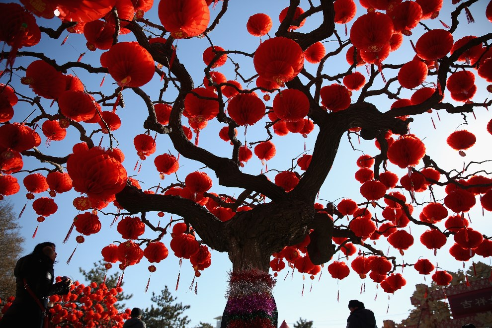 2.CHINY, Pekin, 30 stycznia 2014: Drzewa przyozdobione lampionami w centrum Pekinu. (Foto:  Feng Li/Getty Images)