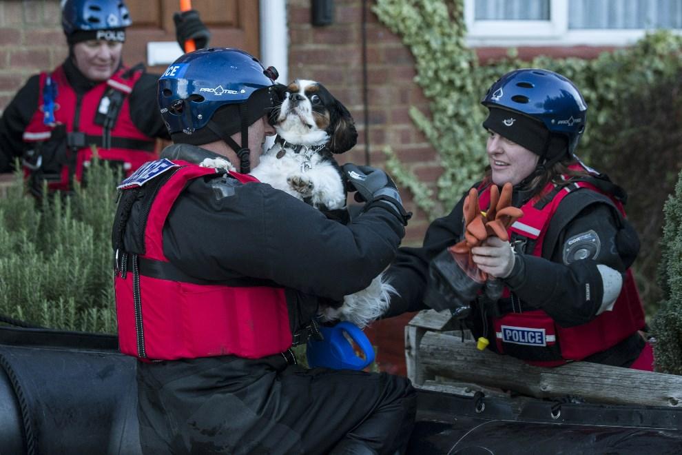WIELKA BRYTANAI, Egham, 11 lutego 2014: Policjanci zabierają psa z zalanego domu. (Foto: Oli Scarff/Getty Images)