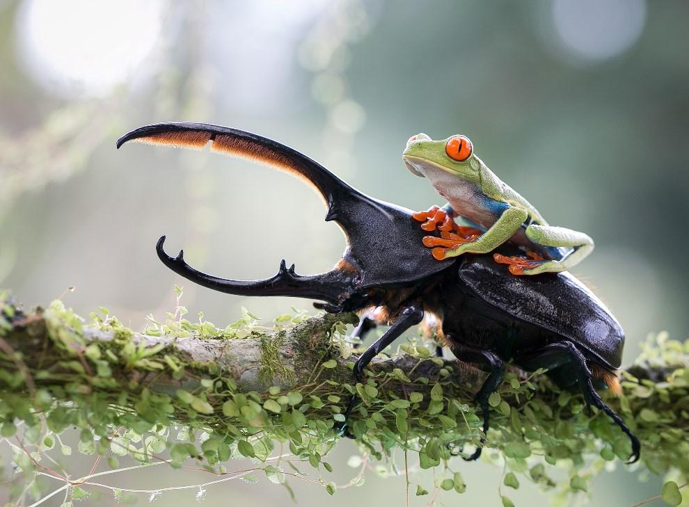 4_NicolasReusens_Spain_Shortlist_Open_Nature&Wildlife_2014