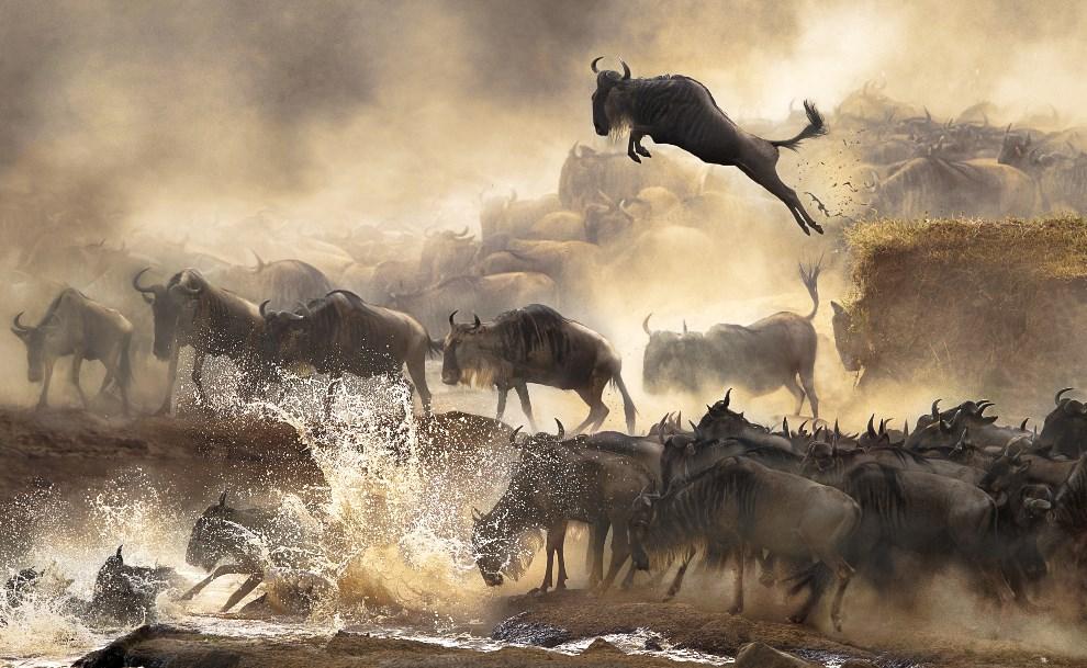 5_Bonnie_Cheung_China_Shortlist_Open_Nature&Wildlife_2014