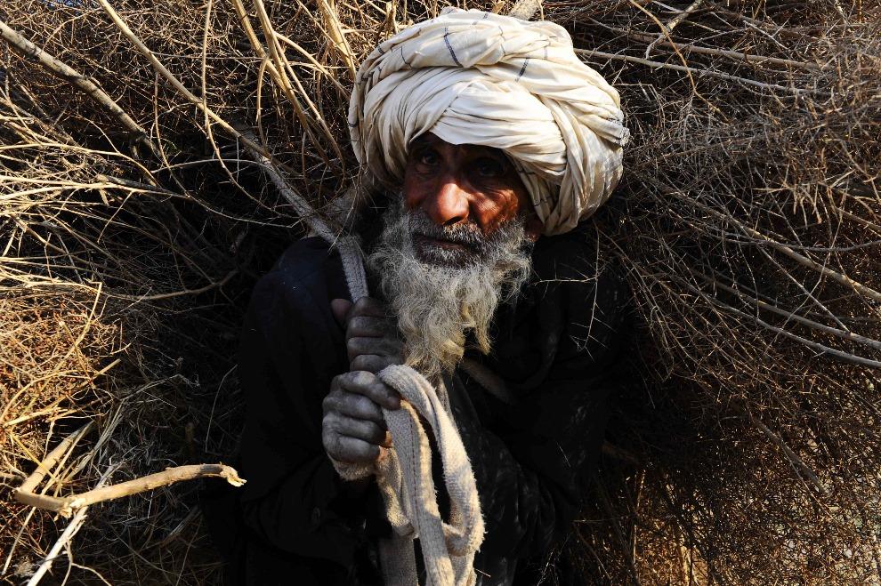7. AFGANISTAN, Herat, 20 lutego 2014: Starszy mężczyzna z wiązką drewna. AFP PHOTO/Aref Karimi