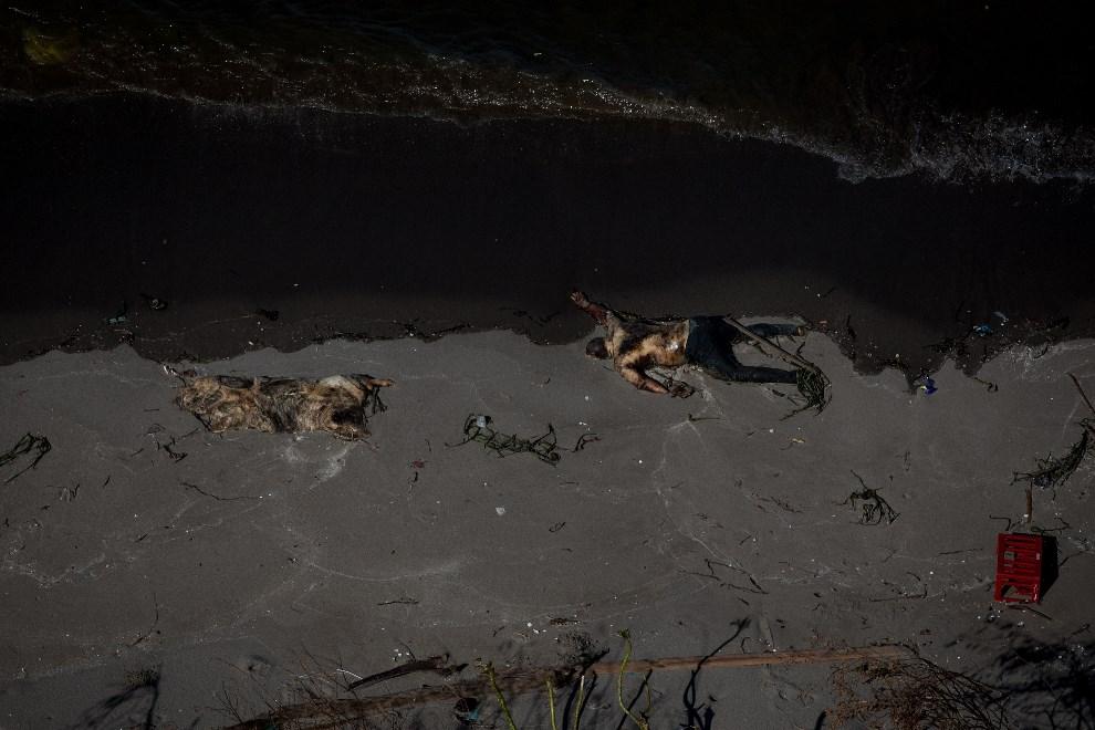 7.FILIPINY, Leyte, 15 listopada 2013: Ciało ofiary tajfunu wyrzucone na brzeg. (Foto: Chris McGrath/Getty Images)