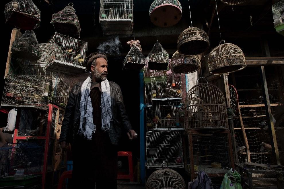 8.AFGANISTAN, Kabul, 25 lutego 2014: Właściciel straganu z ptakami na bazarze w Kabulu. AFP PHOTO/ Nicolas ASFOURI
