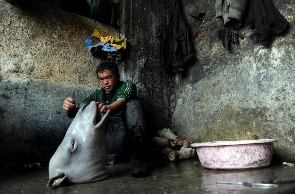 16.AFGANISTAN, Mazar-i-Sharif, 2 marca 2014: Mężczyzna obiera ze skóry głowę krowy. AFP PHOTO/Farshad Usyan