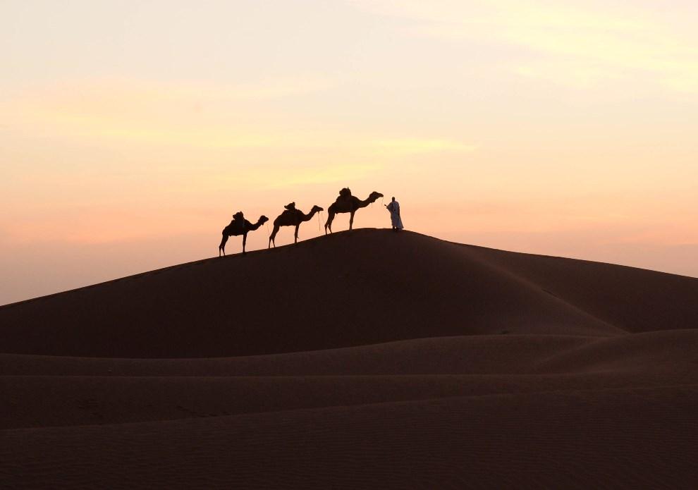 25.MAROKO, Mhamidel-Ghizlane, 16 marca 2014: Mężczyzna prowadzący wielbłądy przez pustynię. AFP PHOTO/FADEL SENNA
