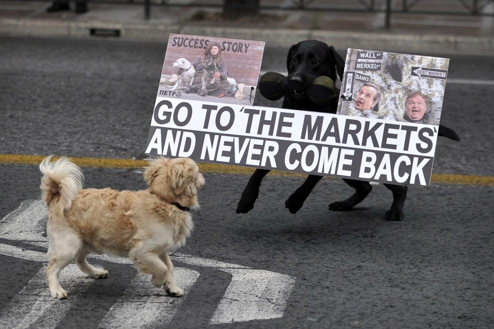 """22.GRECJA, Ateny, 11 kwietnia 2014: Kryzys w Grecji: """"nieprotestujący"""" pies, spotyka """"protestującego"""". AFP PHOTO / LOUISA GOULIAMAKI"""