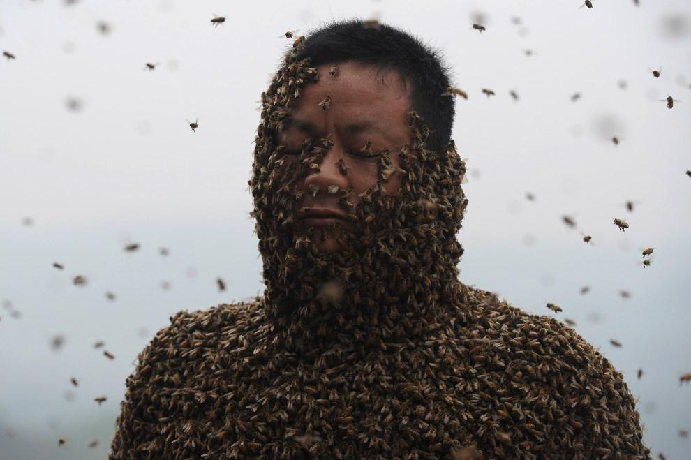"""4.CHINY, Chongqing, 9 kwietnia 2014: Pszczelarz w """"skafandrze"""" z pszczół ważącym blisko 46 kilogramów. AFP PHOTO"""