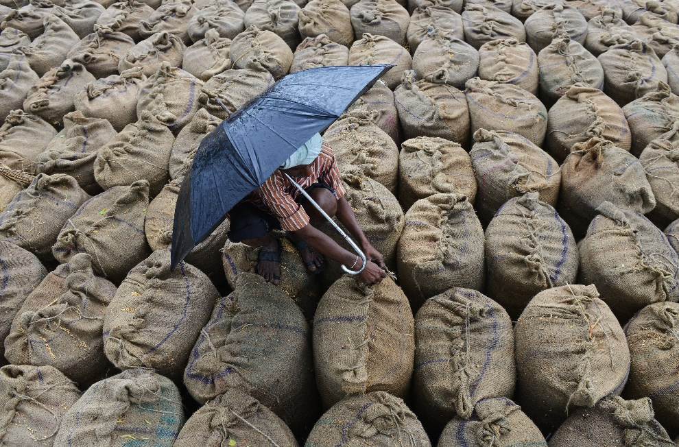 26.INDIE, Jangaon Mandal, 9 maja 2014: Rolnik zabezpieczający worki z ryżem. AFP PHOTO / Noah SEELAM