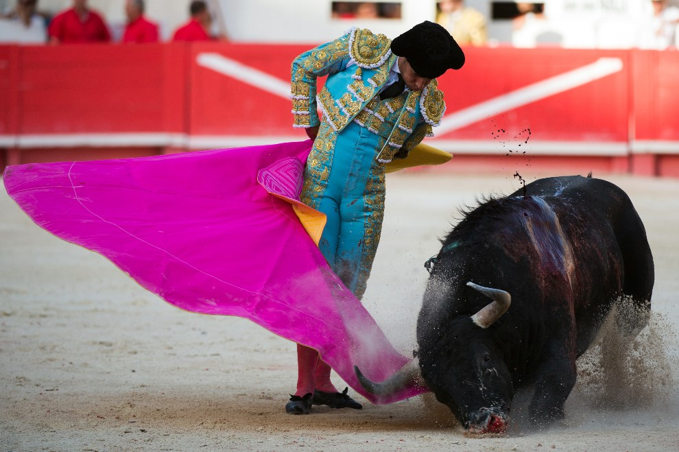 16.FRANCJA, Nîmes, 8 czerwca 2014:  Matador, Ivan Fandino, podczas występu na arenie. AFP PHOTO / BERTRAND LANGLOIS