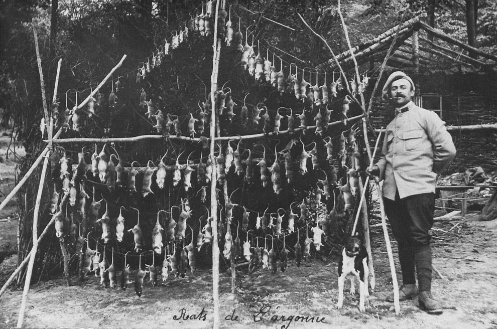 17.FRANCJA, Argonne: Żołnierz ze szczurami złapanymi w okopach pod Argonne. AFP
