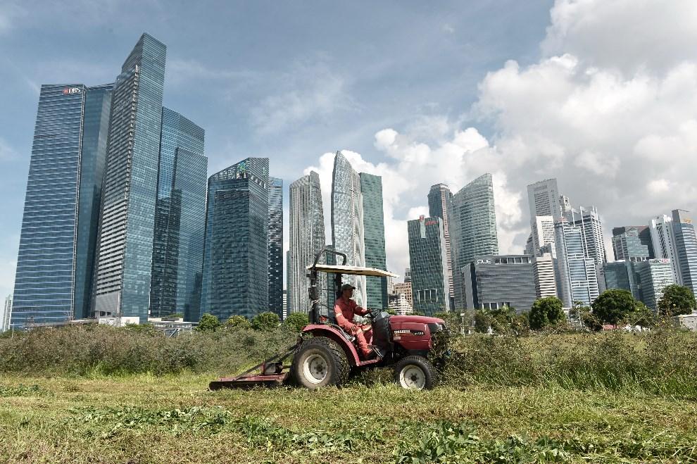 21.SINGAPUR, 2 czerwca 2014: Koszenie trawy w pobliżu centrum biznesowego. AFP PHOTO / ROSLAN RAHMAN