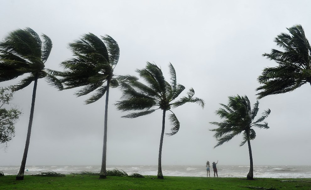 4.AUSTRALIA, Port Douglas, 12 kwietnia 2014: Pięć drzew palmowych uginających się pod naporem wiatru. (Foto: Ian Hitchcock/Getty Images)
