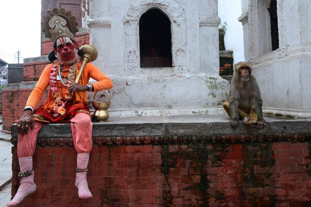 21.NEPAL, Katmandu, 15 lipca 2014:  Sadhu jako Hanuman, siedzi obok makaka w świątyni  Pashupatinath. AFP PHOTO/Prakash MATHEMA