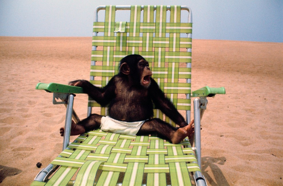 10.LIBERIA, 1977: Szympans na plaży w Liberii. AFP PHOTO/JOHN TOPHAM/JEFF TOPHAM/LIBERIA 77
