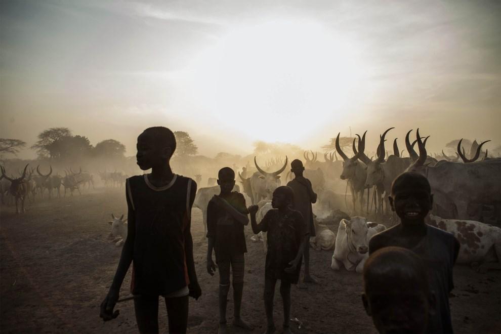 3.SUDAN POŁUDNOWY, Yirol, 12 lutego 2014: Dzieci z plemienia Dinka pilnują stada. AFP PHOTO / FABIO BUCCIARELLI