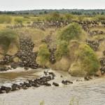Wielka Migracja w Masai Mara