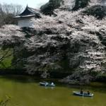 Japonia tonie w kwiatach