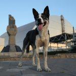 Psy z czarnobylskiej zony
